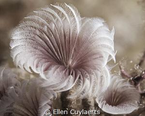 Try a little tenderness by Ellen Cuylaerts