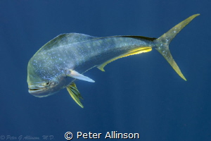 Taken off the coast of cancun by Peter Allinson