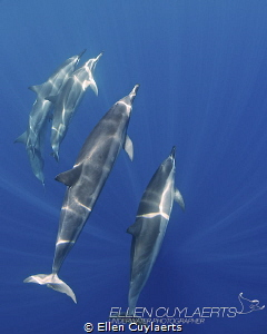 """Blue""