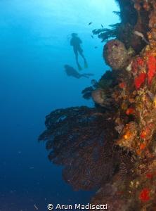 Reef scenic at Scotts head Pinnacles by Arun Madisetti