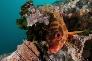 Grouper close-up portrait This grouper was brave enough ... by Dmitry Starostenkov