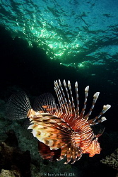 Lion fish late afternoon, Canon 40D, EFS 10-22, 1/125s at... by Ivan Vychodil