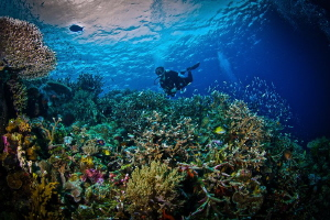 The perfect reef to me. Teeming with life and color in th... by Steven Miller