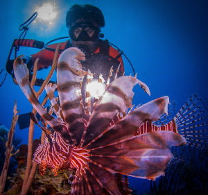 Backlighting a Lionfish. by Steven Miller