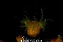 low key coral by Claudia Weber-Gebert