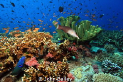 Fiji Wide angle reef shot. by John Bailey