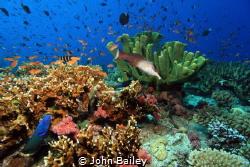 Fiji Wide angle reef shot. by John Bailey