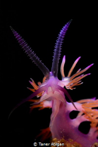 Nudi from Bodrum by Taner Atilgan