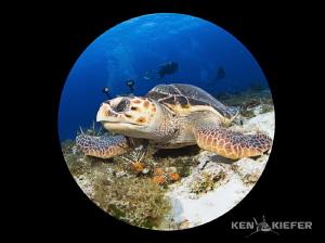 Alien Turtle by Ken Kiefer