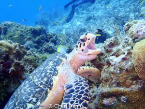Happy Turtle by Cheri Denn