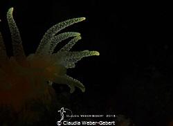 tentacles... by Claudia Weber-Gebert