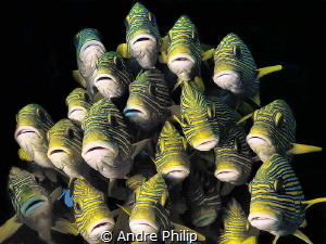 Kiss Mouthes ;-) - Sweetlips frontal by Andre Philip