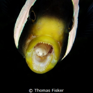 Nemo with parasite. by Thomas Fisker