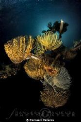 [:b:]Sea Life[:/b:] by Francesco Pacienza