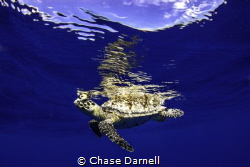 West Side, Grand Cayman Canon 550D Iketlite Housing by Chase Darnell