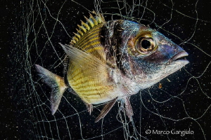 Stop iIllegal fishing in the Protected Marine Reserve Pun... by Marco Gargiulo