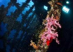 In the middle of Carnatic, wooden skeleton and soft coral... by Ivan Vychodil