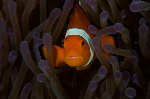Thoughtful Nemo by Dmitry Starostenkov
