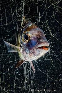 Prisoner In the net by Marco Gargiulo