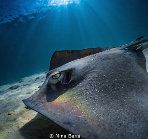 RainbowRay