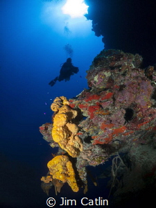 Beautiful orange sponges off the wall at Eagle ray Pass! by Jim Catlin
