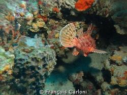 Fish 1 by François Carloni