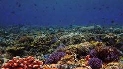 Taken at Wawonii Island, southeast of Sulawesi by Wawan Mangile