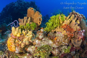 Colorfull Reef Cozumel by Alejandro Topete