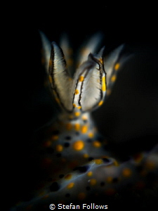 """""""You can't study the darkness by flooding it with light.""""... by Stefan Follows"""