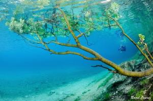 Unusual diving encounter by Raoul Caprez