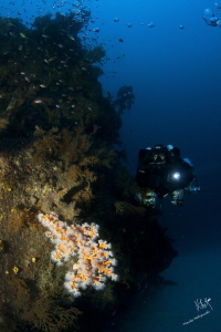 This was a dive to 70 mts, in a technical dive with rebre... by Natasha Maksymenko