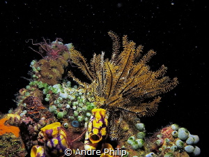 starry night sky underwater ;-) - a nightly reef scene in... by Andre Philip