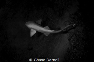 Even though just a Nurse Shark this guy is still as beaut... by Chase Darnell