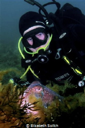 Giant Australian Cuttlefish impress photography group wit... by Elizabeth Solich