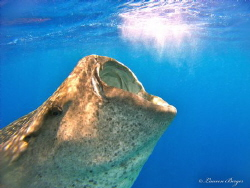 """""""Magic""""  I shot this photo while freediving in Isla Muje... by Lauren Berger"""