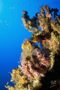 This pic was taken at 65 mts were you can see soft coral ... by Natasha Maksymenko