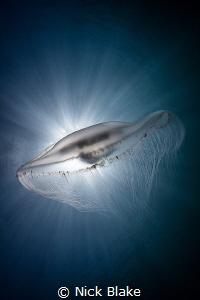 Compass Jellyfish and sunburst, Lundy Island by Nick Blake