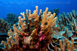 Colors of the Kona Reefscape. by Stuart Ganz