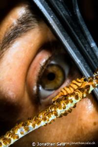 Whip Coral Shrimp by Jonathan Sala
