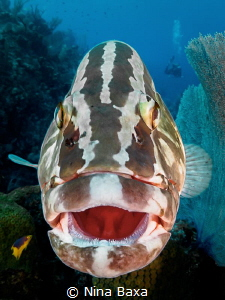 Lips.
