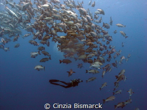 Followin' the school!