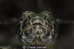 """""""Face to Face""""   Canon 550D Canon 100mm by Chase Darnell"""