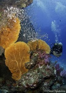Coral bommie by Petteri Viljakainen