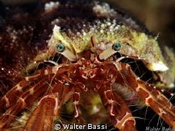 My bright eyes  by Walter Bassi