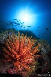 Coralful Puerto Galera. by Maziar Momtazi