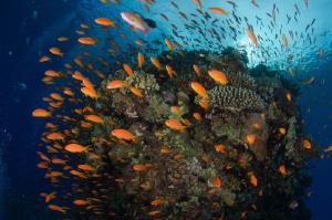 Abudance of coral reef by Dmitry Starostenkov