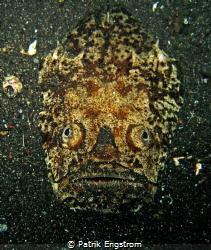 Stargazer that seems to be a prehistoric mask by Patrik Engstrom