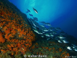 Life by Walter Bassi
