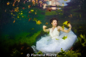 Jasmine in the underwater garden by Plamena Mileva