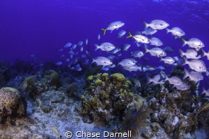 La Mesa, Grand Cayman by Chase Darnell